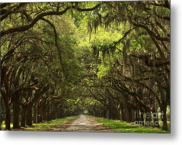 Under The Ancient Oaks Metal Print