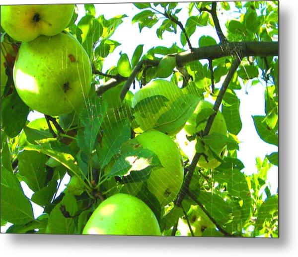 Under The Apple Tree Metal Print