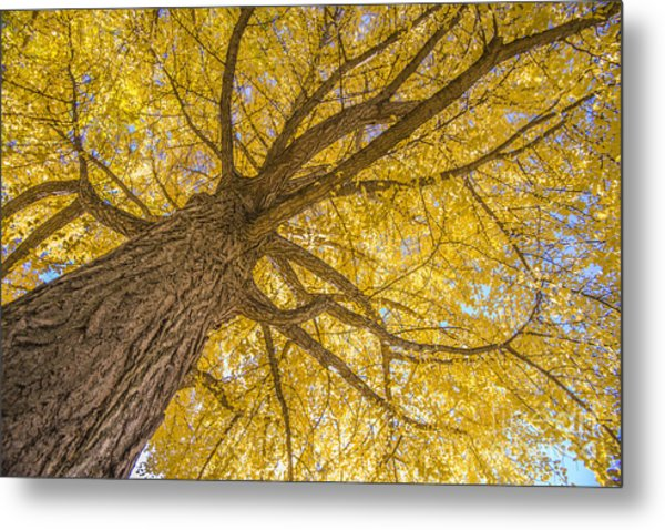 Under The Autumn Tree Metal Print