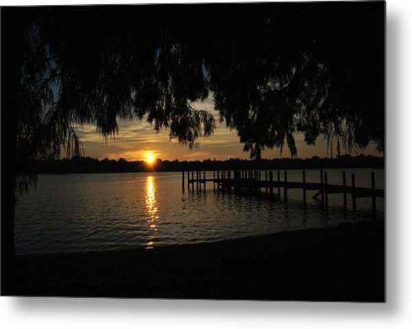 Under The Bald Cypress Metal Print