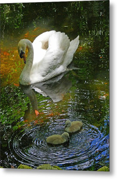 Under The Cobs Watchful Eye Metal Print