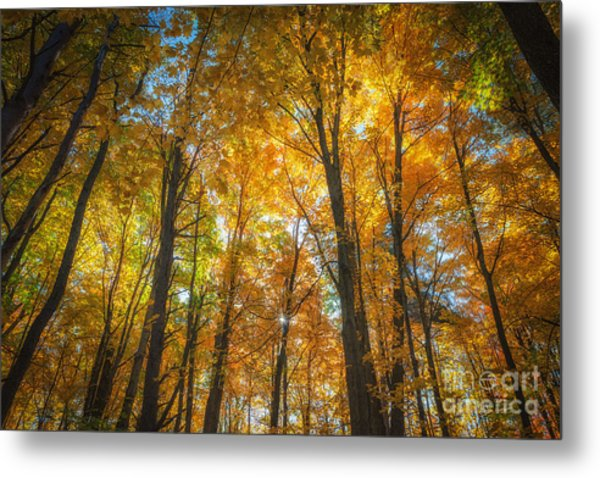 Under The Golden Canopy Metal Print