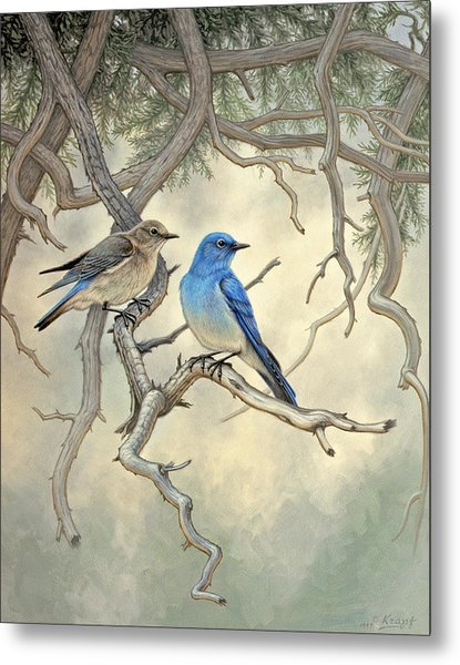 Under The Old Juniper-mountain Bluebirds Metal Print