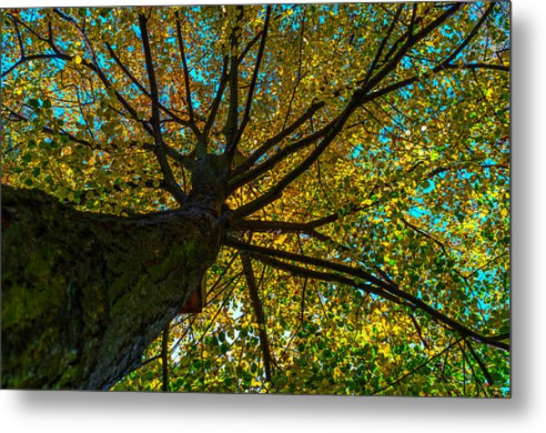 Under The Tree S Skirt Metal Print