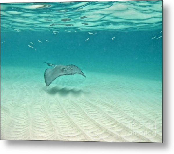 Underwater Flight Metal Print