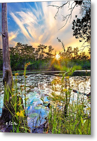 Yellow Wild Flowers Swamp Sunset Blue Sky Reflection Art Prints Metal Print