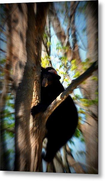 Up A Tree Metal Print by Valarie Davis