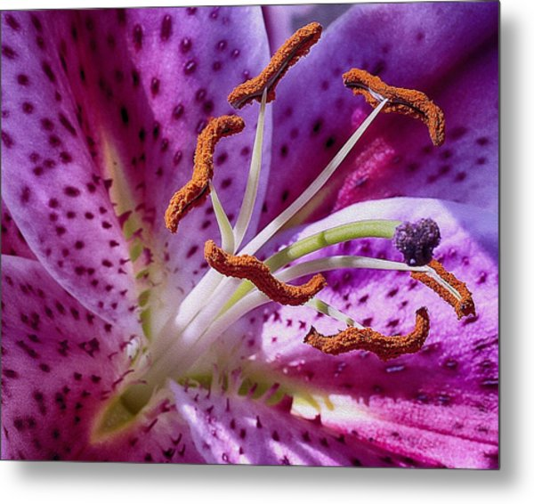 Up Close Metal Print by Wayne Wood