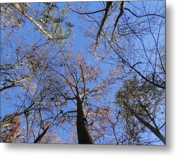 Up Through The Forest Metal Print