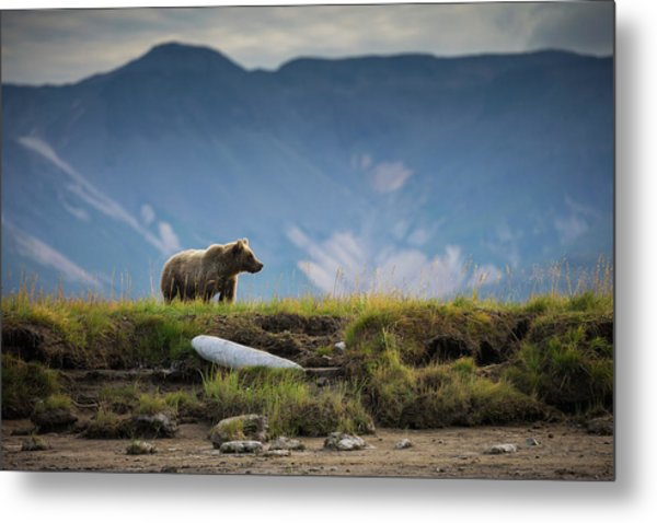 Upon The Bluff Metal Print by Chase Dekker Wild-life Images