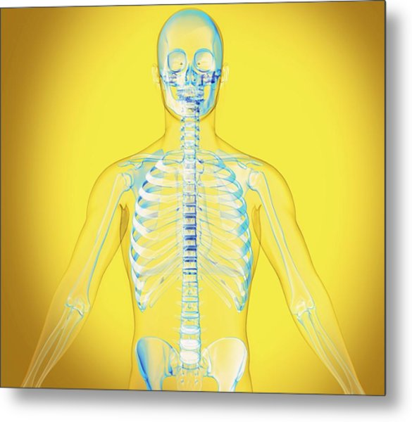 Upper Body Metal Print by Claus Lunau/science Photo Library