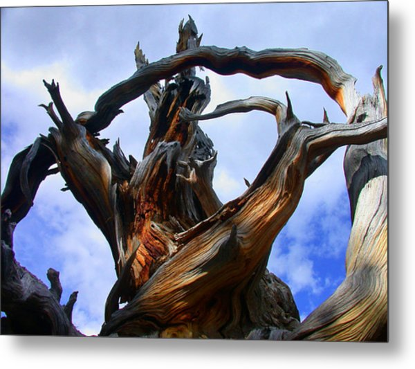 Metal Print featuring the photograph Uprooted Beauty by Shane Bechler