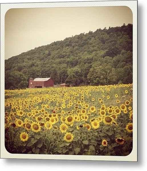 Upstate Metal Print by Mike Maher