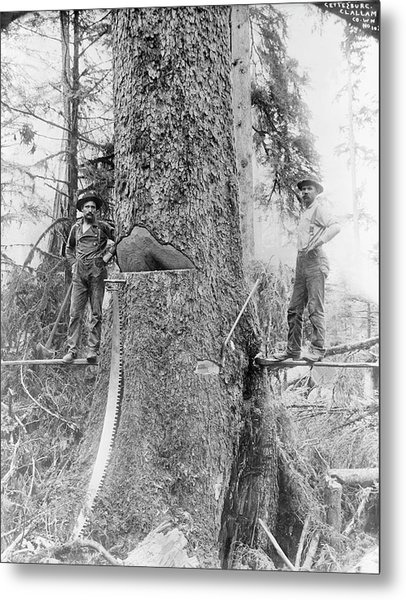 Us Forestry Metal Print by Library Of Congress