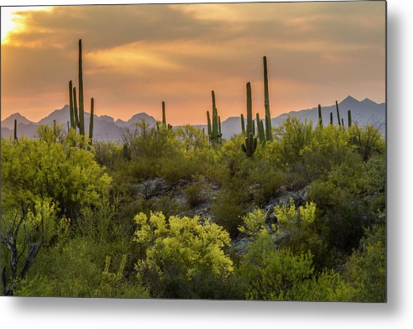 Usa, Arizona, Saguaro National Park Metal Print