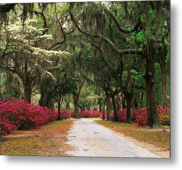Usa, Georgia, Savannah, Road Lined Metal Print by Adam Jones