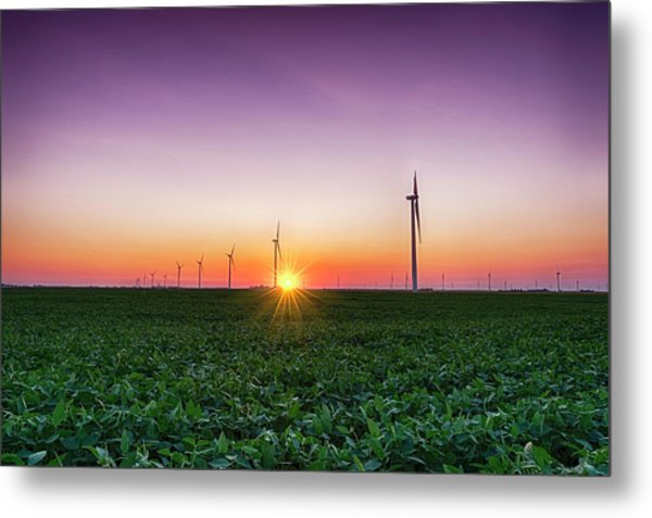 Usa, Indiana Soybean Field And Wind Metal Print