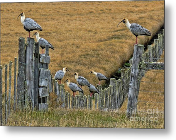 End Of The Road Birds Metal Print