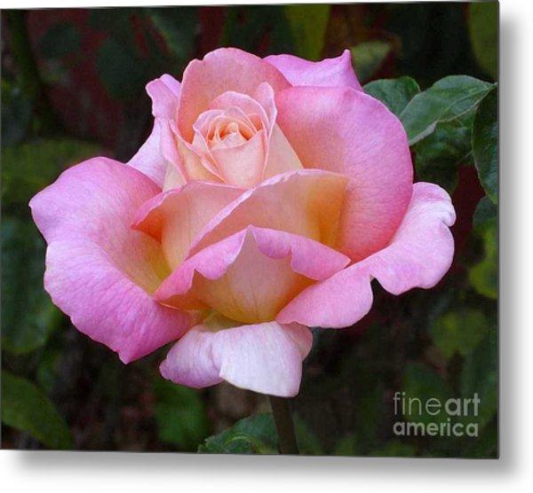 Valentine Pink Rose Metal Print