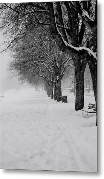 Vancouver Winter Trees Metal Print