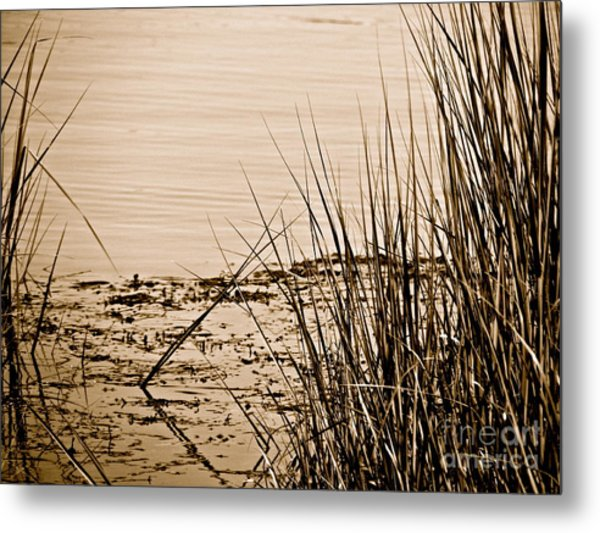 Vanishing  Metal Print by Q's House of Art ArtandFinePhotography