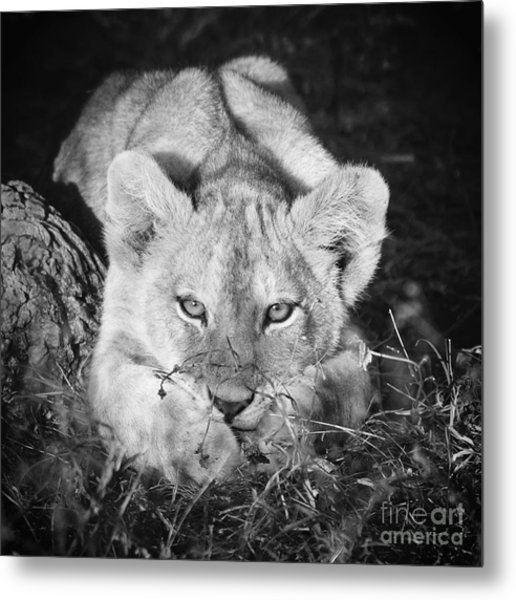 Vanishing Species 2 Metal Print