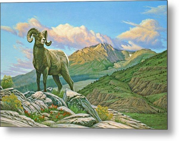 Vantage Point - Bighorn Metal Print by Paul Krapf