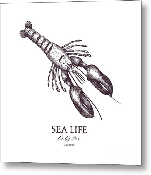 Vector Sea Life Illustration. Hand Metal Print