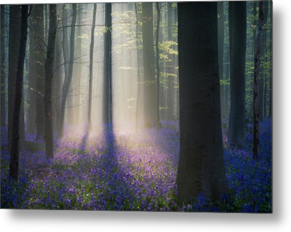 Velvet Light Metal Print