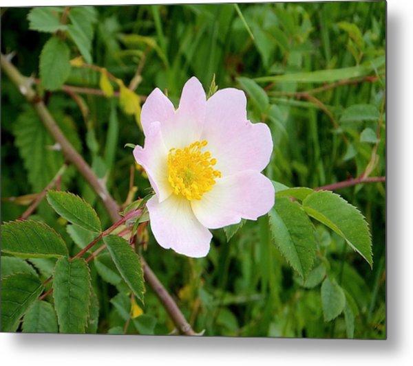 Vert Jaune Rose Metal Print
