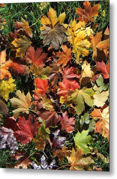 Vibrant Days Of Autumn Metal Print by Margaret McDermott