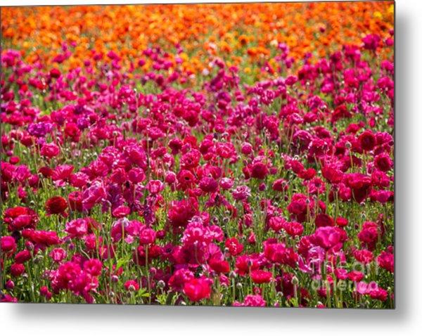 Vibrant Flower Field Metal Print by Julia Hiebaum
