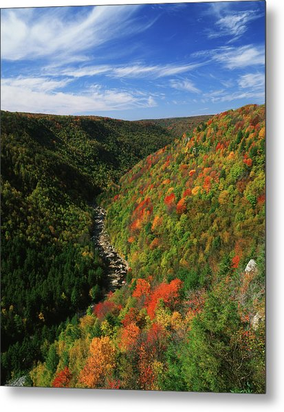 View Of Blackwater Canyon In Autumn Metal Print