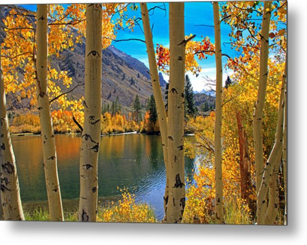 View Through The Aspens Metal Print