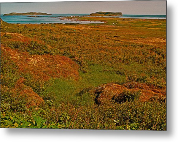 Viking Landing Point At L'anse Aux Meadows-nl Metal Print