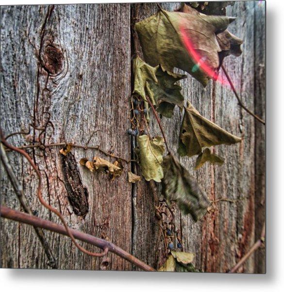 Vines And Barns Metal Print