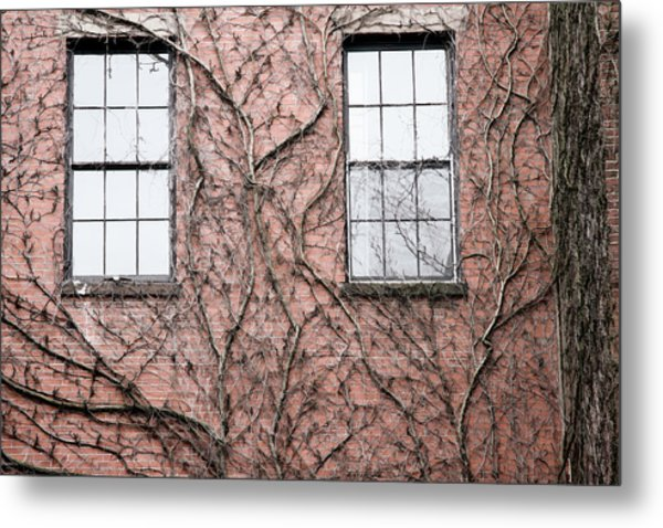 Vines And Brick Metal Print