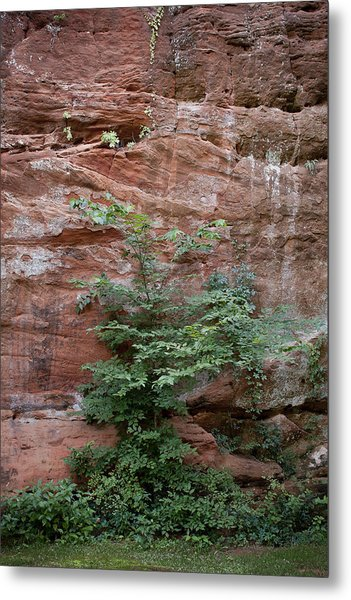 Vines And Canyon Walls Metal Print
