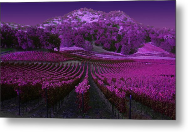 Vineyard 41 Metal Print
