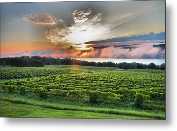 Vineyard At Sunrise Metal Print