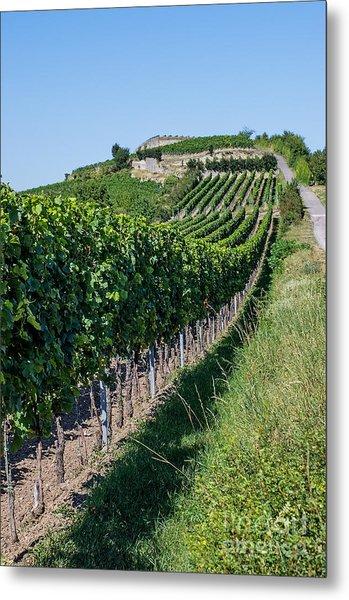 Vineyard In Rhineland Palatinate Metal Print by Palatia Photo