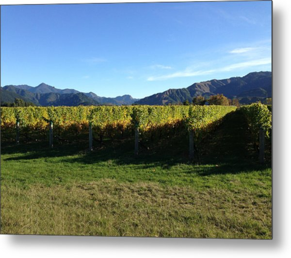 Vineyard Metal Print by Ron Torborg
