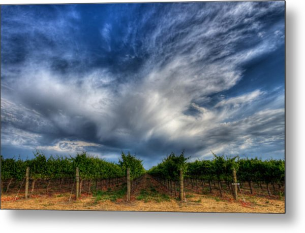 Vineyard Storm Metal Print