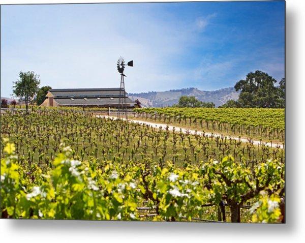 Vineyard With Young Vines Metal Print