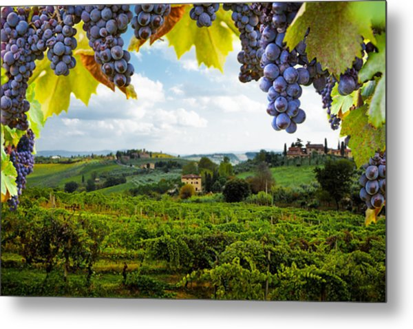 Vineyards In San Gimignano Italy Metal Print