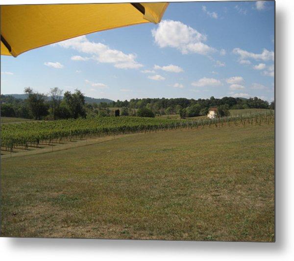 Vineyards In Va - 121249 Metal Print by DC Photographer