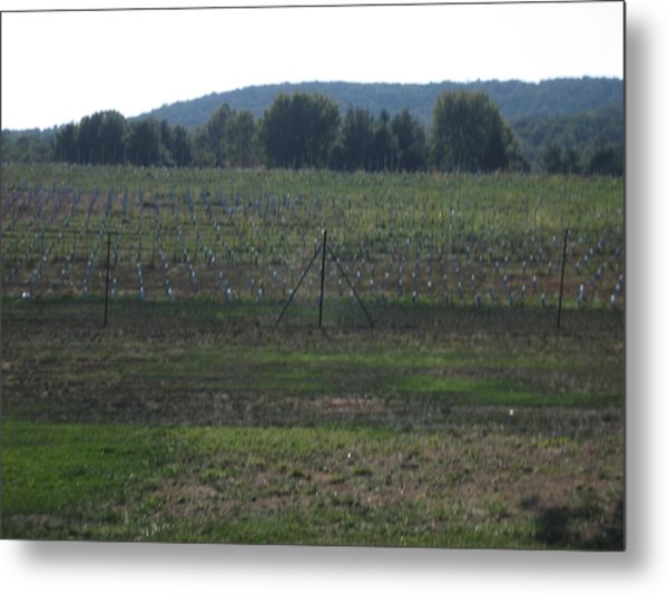 Vineyards In Va - 121255 Metal Print by DC Photographer