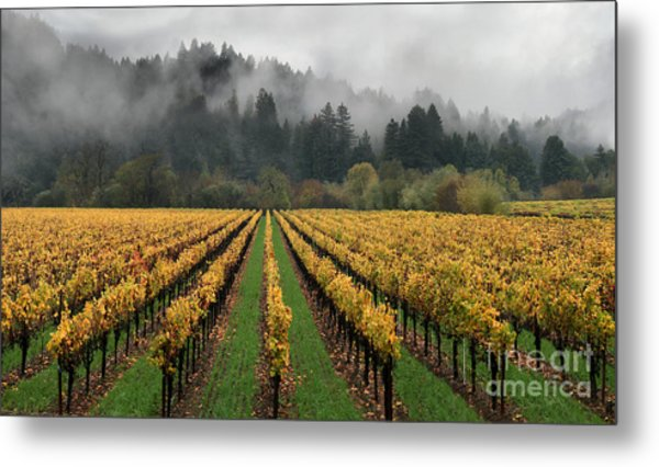 Vineyard Russian River Wine Country Sonoma County California Metal Print