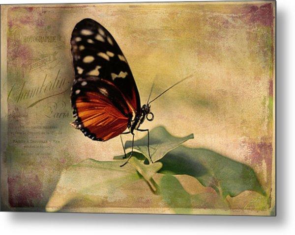 Vintage Butterfly Card Metal Print