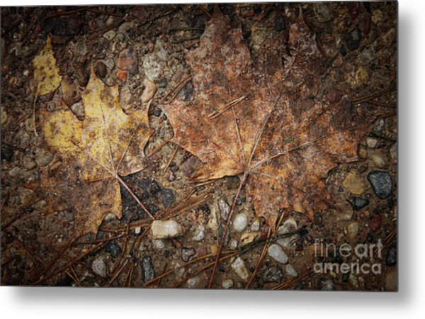 Vintage Maple Leaf Metal Print by Jolanta Meskauskiene